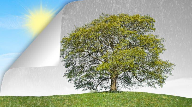 Begreppet regnar vs sunen royaltyfri foto