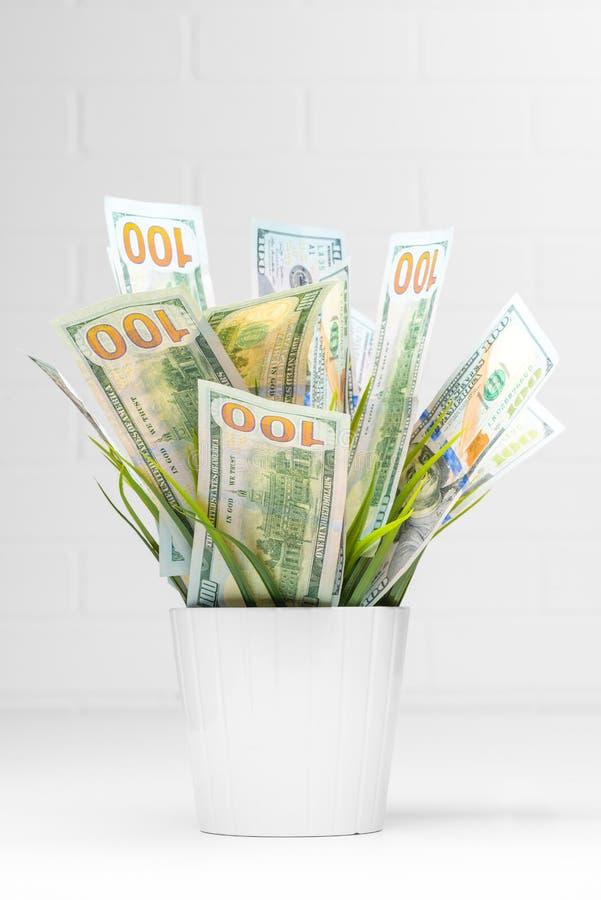begreppsmässig finansiell isolerad white för tillväxt bild Hundra dollarräkningar som växer i blomma royaltyfri bild