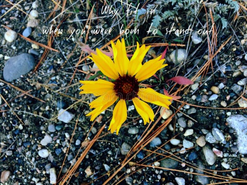 Begreppsmässig inspirerande bild med gul blommamakro royaltyfri fotografi