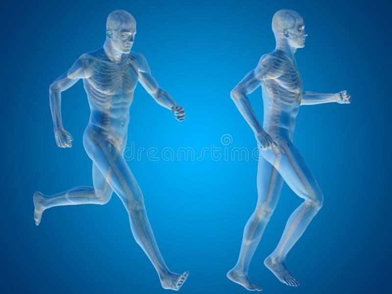 Begreppsmässig man eller mänsklig anatomi 3D eller kropp på blått royaltyfri illustrationer