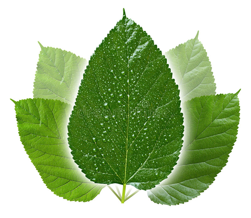 Begriffsgrün-Blätter stockfotografie