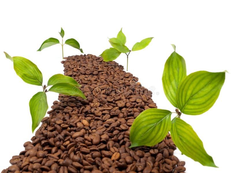 Begriffsstraße hergestellt von den Kaffeebohnen lizenzfreie stockfotos