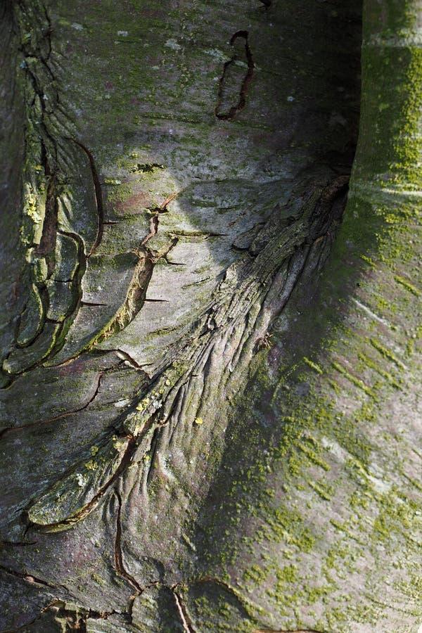 begrundande för skönhetnaturinspiration vilar verkligt trä för jord för planeten för energi för liv för växter för flora för verk royaltyfria bilder