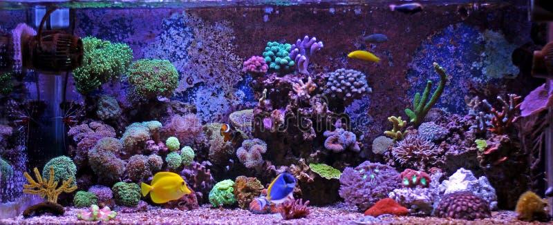 Behållare för akvarium för korallrev royaltyfria bilder