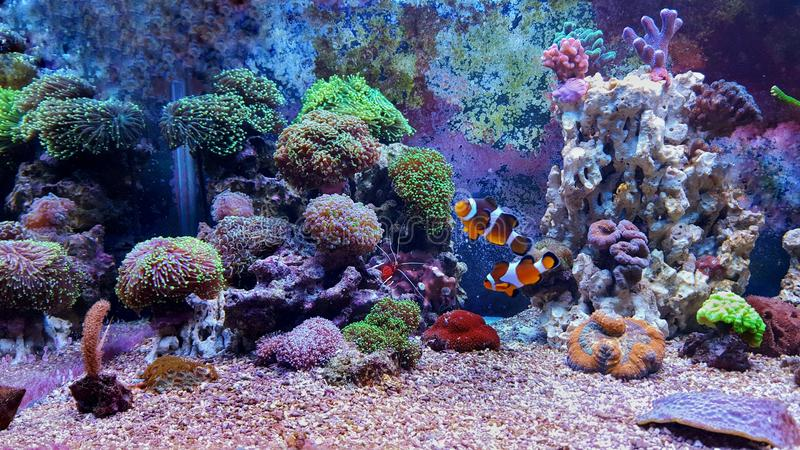 Behållare för akvarium för korallrev arkivfoto