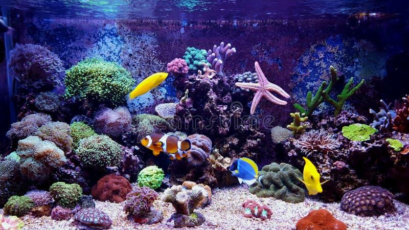 Behållare för akvarium för korallrev royaltyfria foton