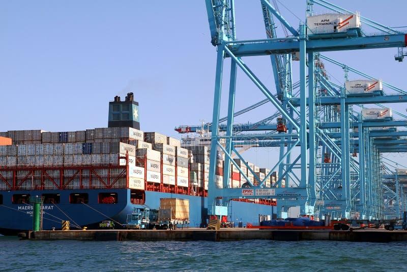 Behållareskeppet Maersk Sarat som arbetar med behållare, sträcker på halsen fotografering för bildbyråer