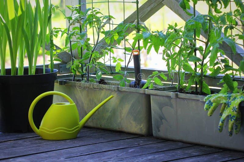 Beh?lterGem?seanbau Gem?segarten auf einer Terrasse Blume, Tomaten, die im Beh?lter wachsen lizenzfreie stockfotografie