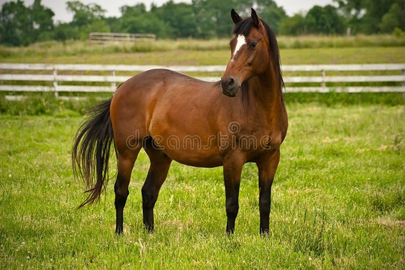 behagfull häst royaltyfria bilder