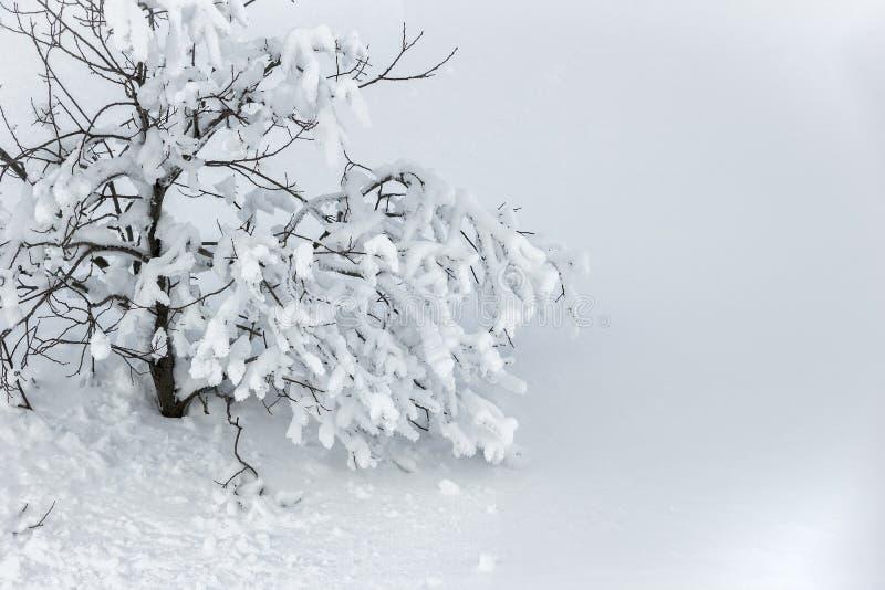 Behandeld met Sneeuw royalty-vrije stock foto's