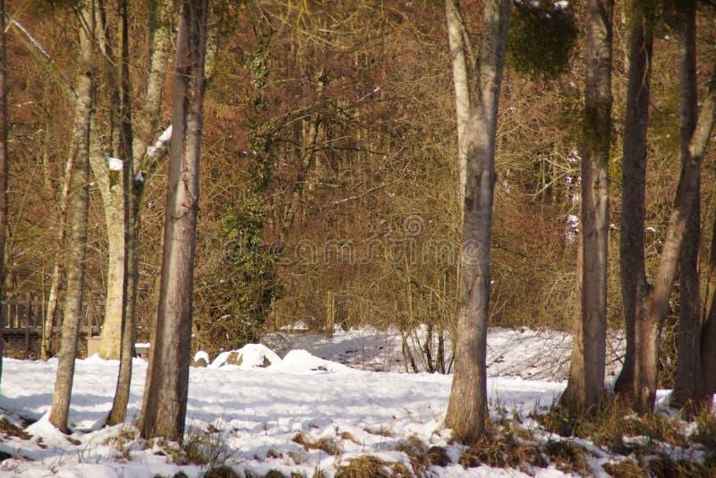 Behandeld met sneeuwbos - Frankrijk royalty-vrije stock afbeelding