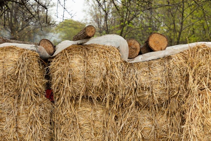 Behandelde balen van hooi in het bos royalty-vrije stock afbeelding