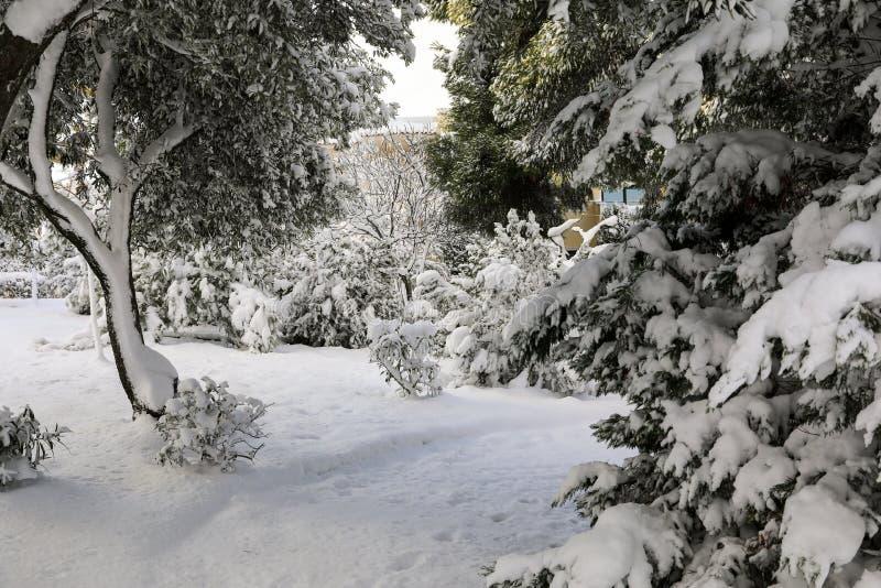 Behandelde de mooie sneeuw van de de winterochtend bomen in het park van de stad van Athene, Griekenland, achtste van Januari 201 stock afbeelding