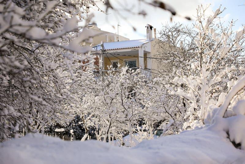 Behandelde de mooie sneeuw van de de winterochtend bomen in de tuin van Nea Erythrea, Athene, Griekenland, achtste van Januari 20 stock fotografie