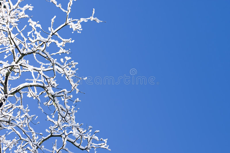 Behandelde de sneeuw vertakt zich Blauwe Hemel royalty-vrije stock afbeelding