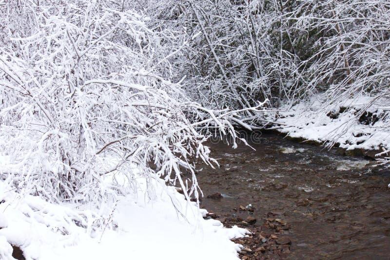Behandelde sneeuw, takken royalty-vrije stock foto
