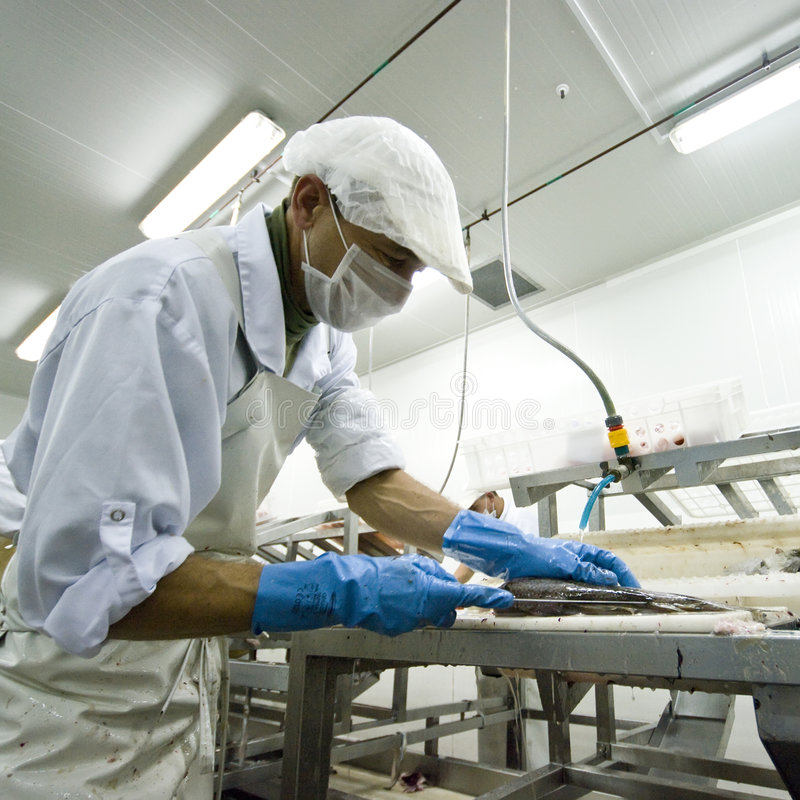 behandla för fiskmanufacture arkivbild