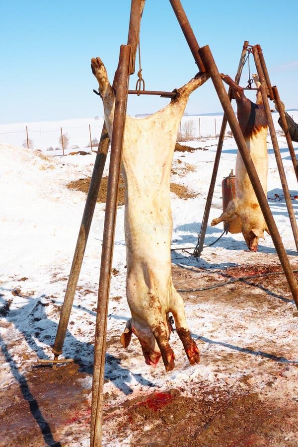 behandla för meat royaltyfria foton