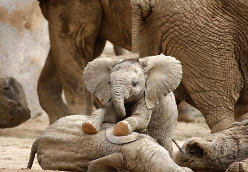behandla som ett barn att leka för elefanter fotografering för bildbyråer