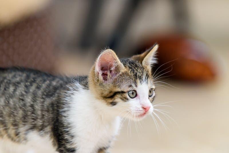 Behandla som ett barn Cat Playing arkivbilder
