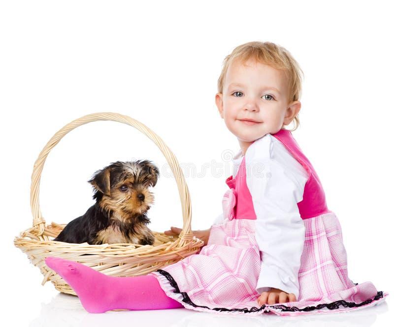 Behandla som ett barn den flicka- och Yorkshire Terrier valpen På white royaltyfria bilder