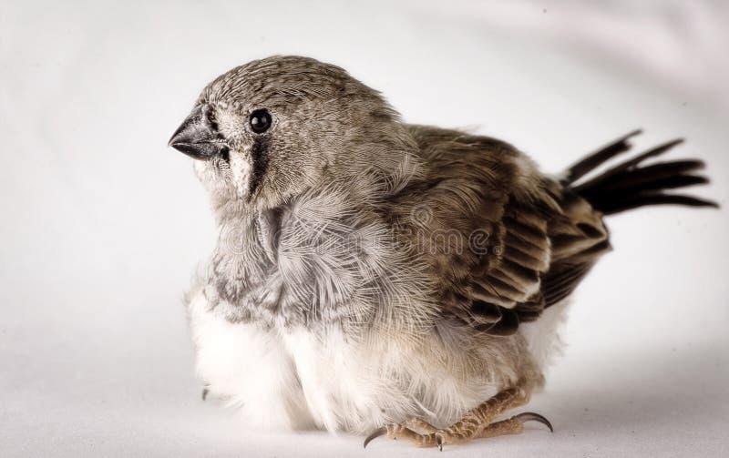 behandla som ett barn den gulliga fågeln arkivfoton
