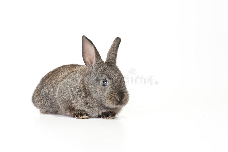 behandla som ett barn den gulliga kaninen royaltyfri bild