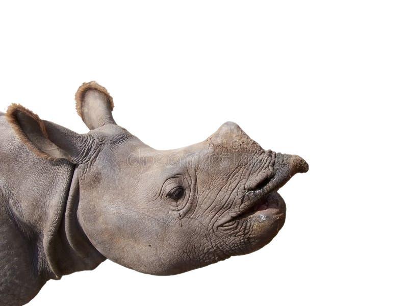 behandla som ett barn den head noshörningen royaltyfri fotografi