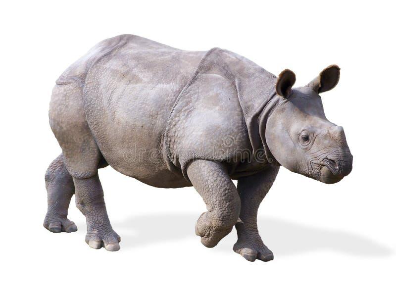 behandla som ett barn den isolerade noshörningen arkivfoton
