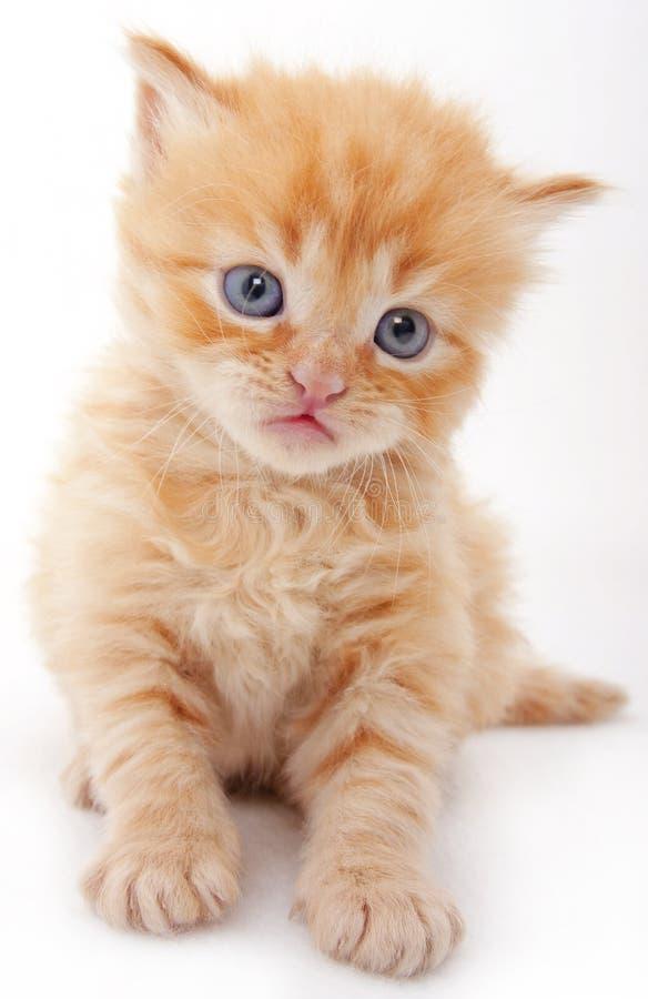 behandla som ett barn den nyfikna katten arkivfoto