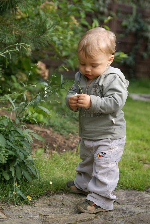 behandla som ett barn det trädgårds- spädbarn royaltyfri bild