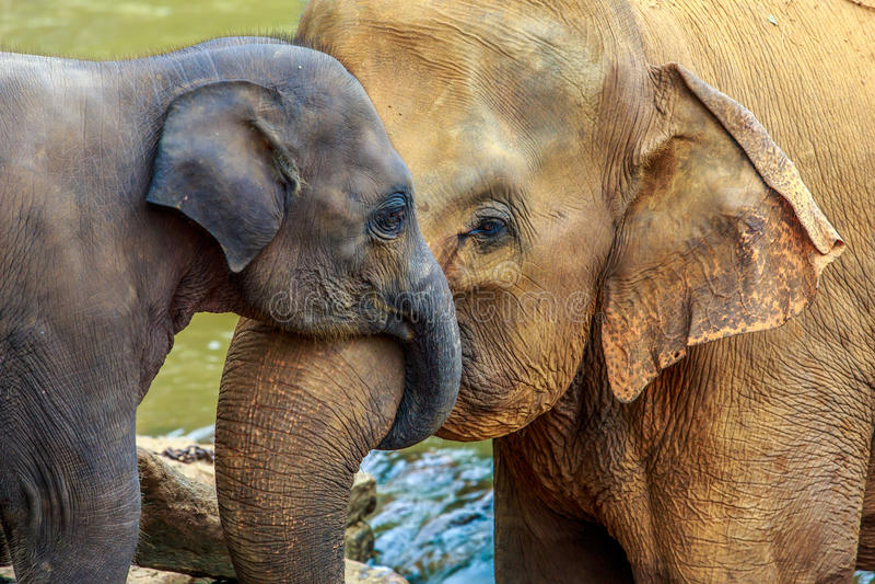 behandla som ett barn elefanten arkivfoto