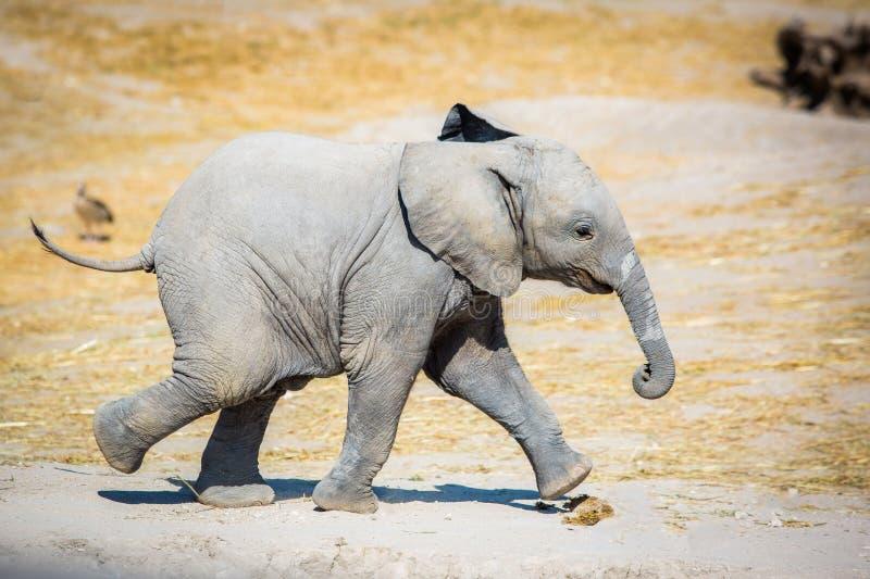 Behandla som ett barn elefanten som från sidan kör royaltyfria bilder
