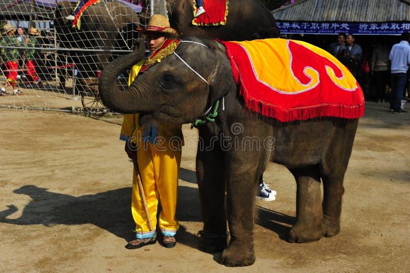 Behandla som ett barn elefanten, Kina royaltyfri fotografi