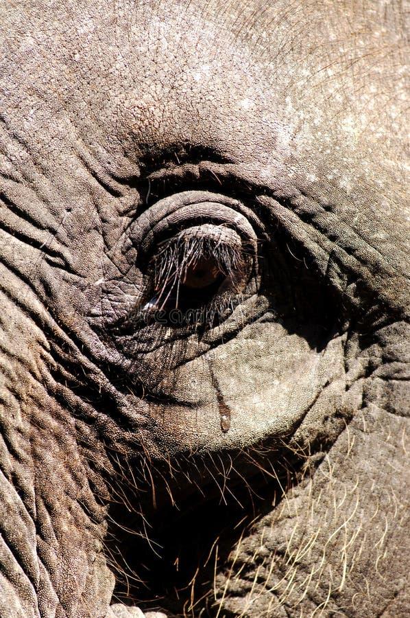 behandla som ett barn elefantkohsamuien thailand royaltyfri fotografi