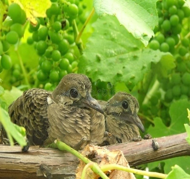 behandla som ett barn fåglar royaltyfri fotografi
