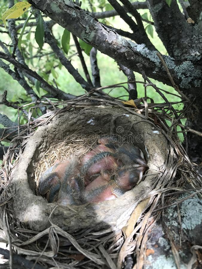 behandla som ett barn fåglar arkivbilder