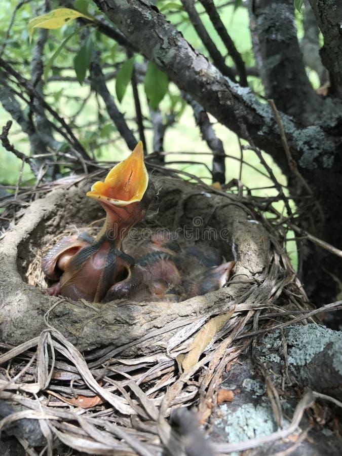 behandla som ett barn fåglar royaltyfri bild