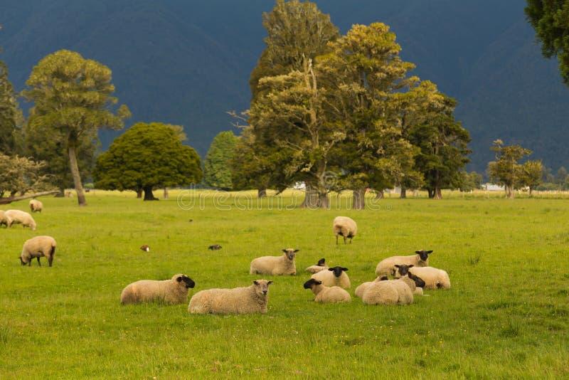 Behandla som ett barn får över grönt exponeringsglas Nya Zeeland arkivfoto