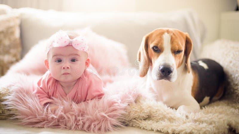 Behandla som ett barn flickan med en beaglehund royaltyfria foton