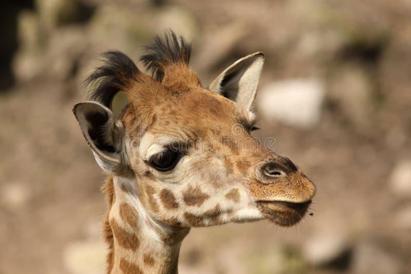 behandla som ett barn giraffståenden royaltyfri foto