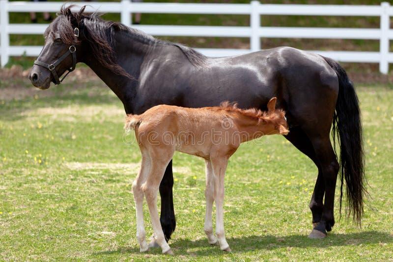 behandla som ett barn hästmodern royaltyfri fotografi