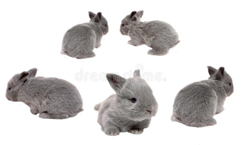 behandla som ett barn kaniner arkivbilder