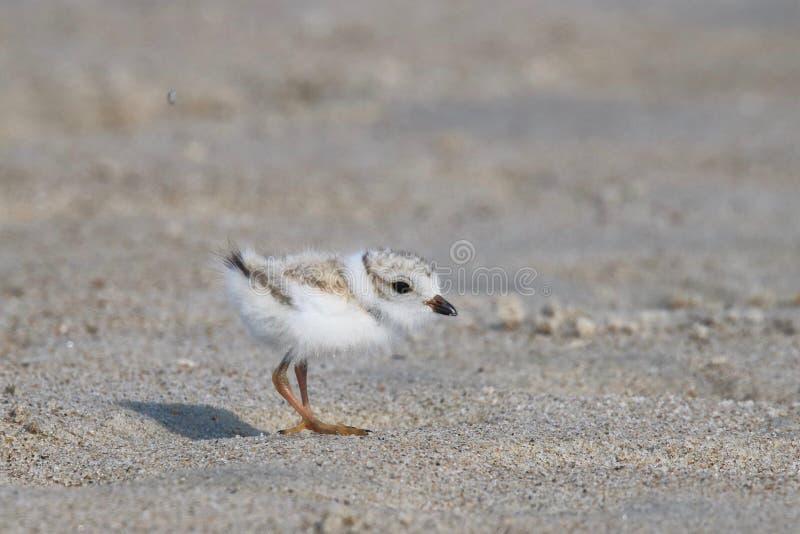 Behandla som ett barn leda i rör brockfågeln arkivfoto