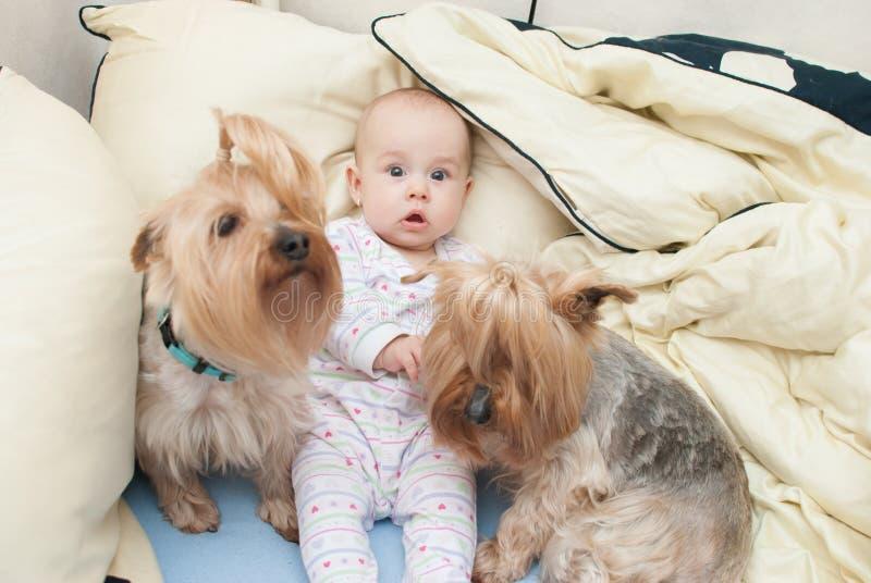 Behandla som ett barn med hundkapplöpning royaltyfria foton