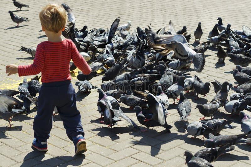A behandla som ett barn pojken som omges av duvor på piazza royaltyfri fotografi