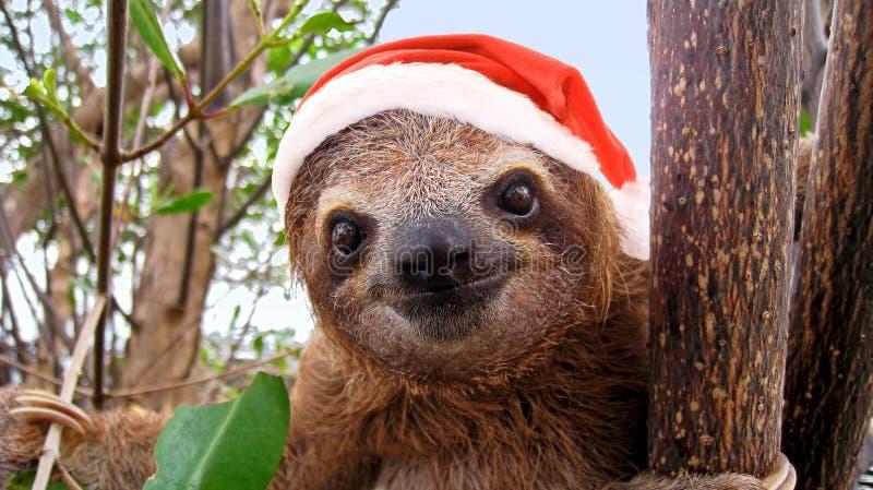 Behandla som ett barn slothen i den röda Santa Claus hatten fotografering för bildbyråer