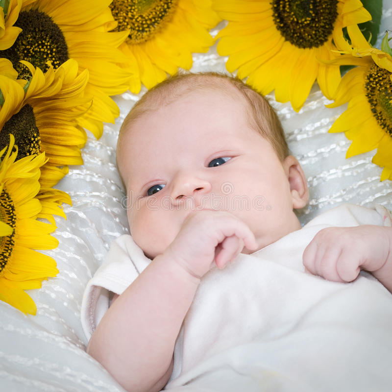behandla som ett barn solrosen royaltyfri foto
