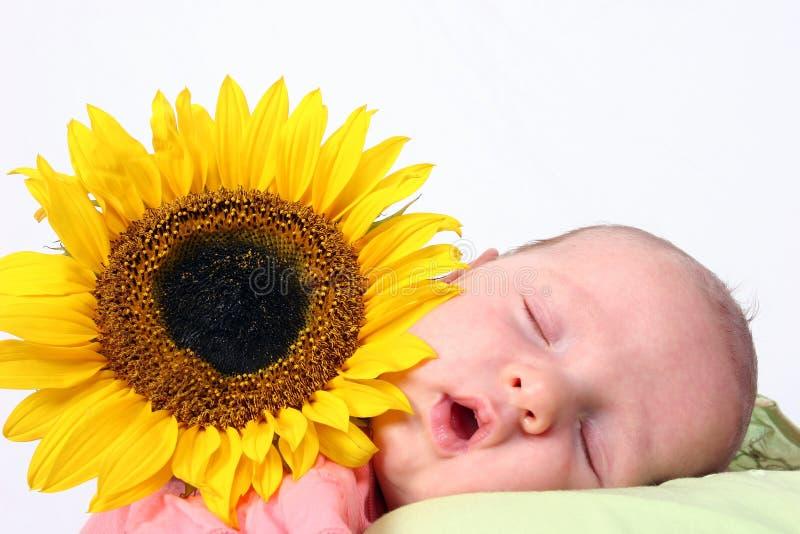 behandla som ett barn solrosen royaltyfri fotografi