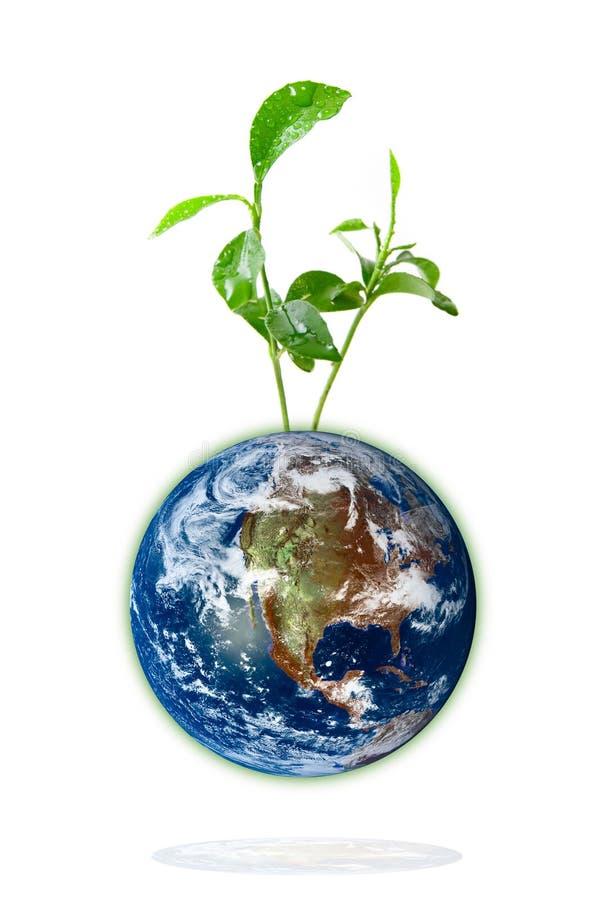 Behandla som ett barn växten som växer från jorden royaltyfri illustrationer